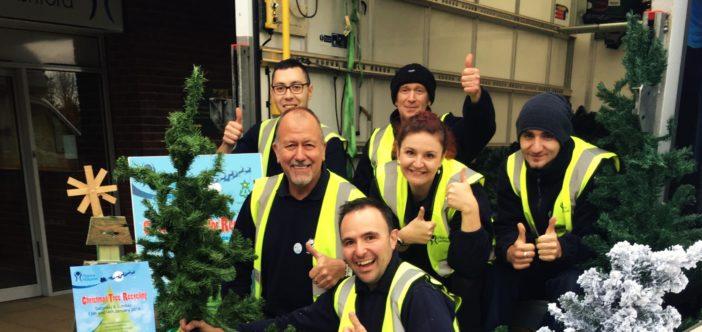 Tree Recycling main 2
